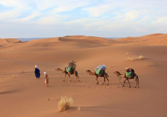 woestijn reis sahara kamelen nomaden
